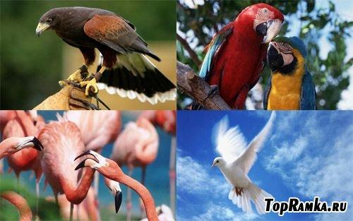 Подборка фотографий птиц