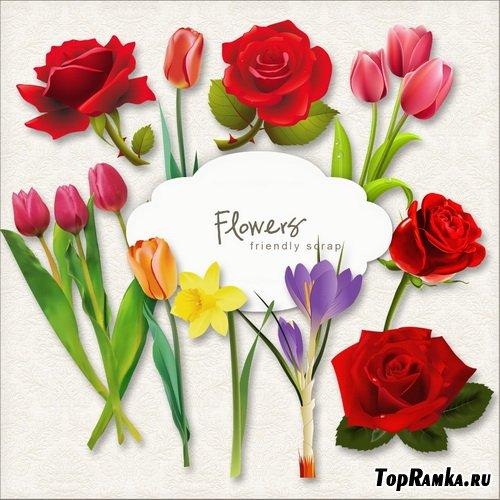 Растровый клипарт PNG - Коллекция цветов