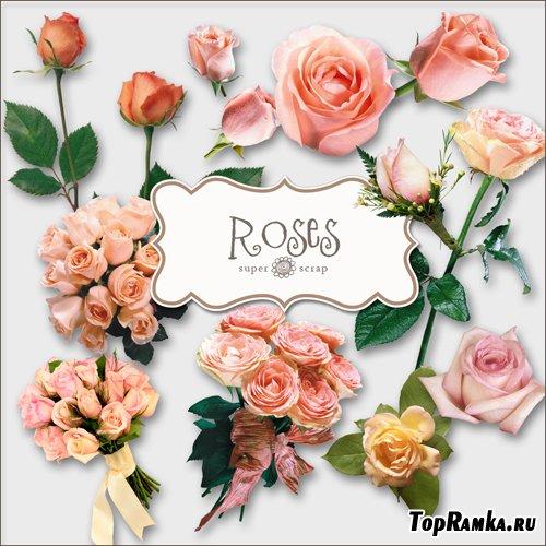 Скрап-набор - Букеты Роз