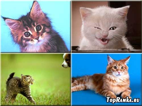 Коллекция фотографий - Котята и кошки