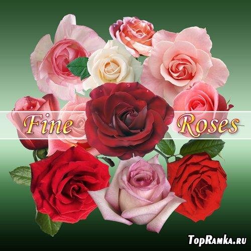 PSD-исходник - Прекрасные розы