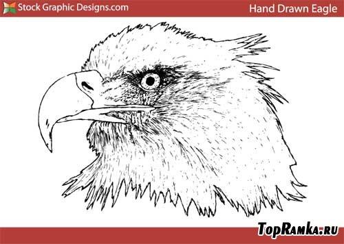 Нарисованный орел