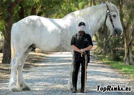 Девушка и гиганская лошадь