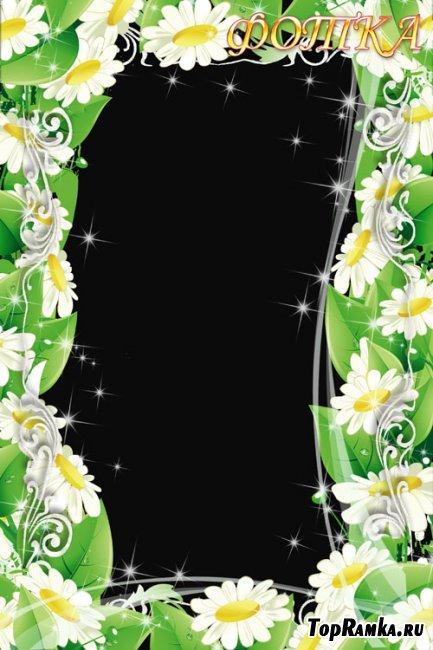 Цветочная рамка для фотошоп - Чудесные ромашки