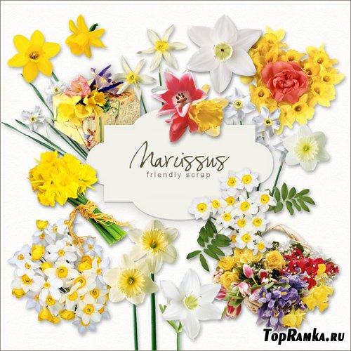 Scrap-kit - Narcissus