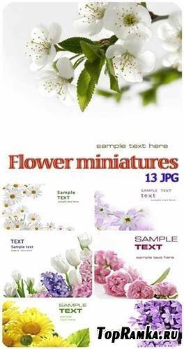Flower miniatures background (Цветочные миниатюры)