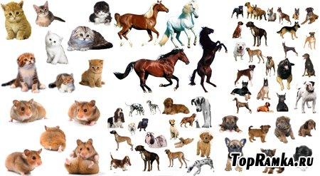 PSD исходники - Животные