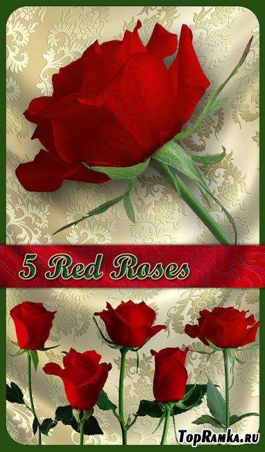 PNG Клипарт - Прекрасные красные розы