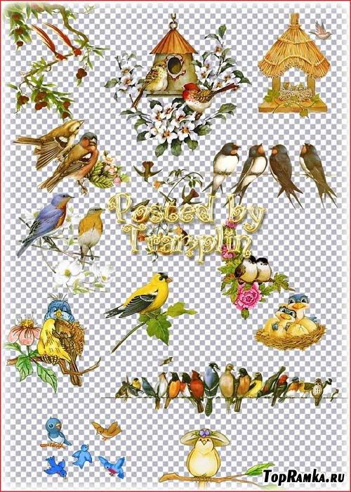 Клипарт на прозрачном фоне – Птица, скворечники, ветки, цветы