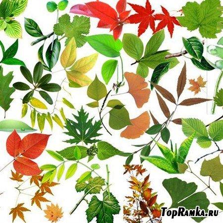 Большая коллекция листьев в PSD