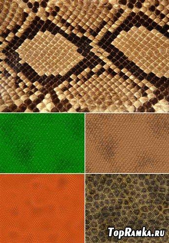Змеиная кожа - текстуры (HQ)