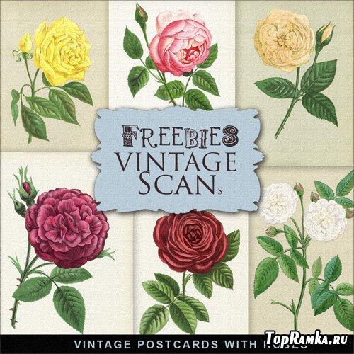 Scrap-kit - Vintage Postcards With Roses