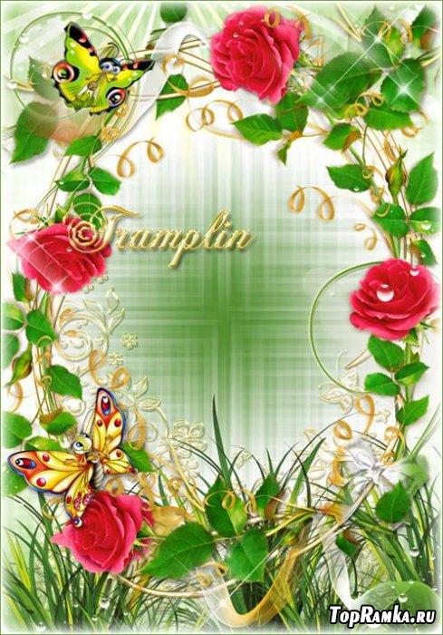 Рамки с красными розами – Цветы как ангелы, божественно чисты