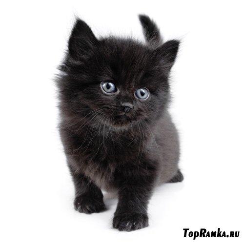 Черные Кошки / Black Cats (22 photo)
