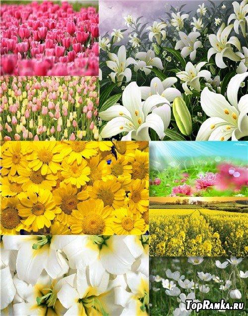 Фотосток - Скромные полевые цветы