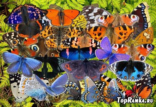 Клипарт Легкие крылья бабочек