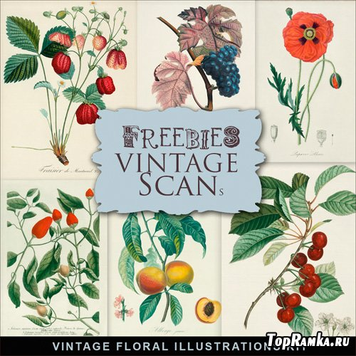 Scrap-kit - Vintage Floral Illustrations