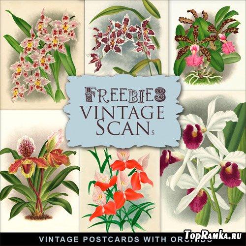 Skrap-kit Vintage Postcards.
