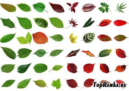 Большая коллекция листьев кустарников и комнатных растений