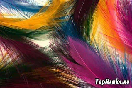 Фоны красивых перьев разнообразных птиц