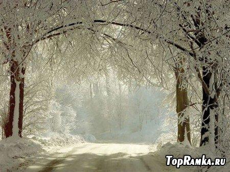 Фотографии дороги на фоне леса