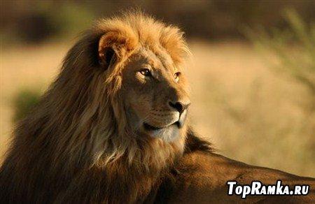 Клипарты животных домашних и диких