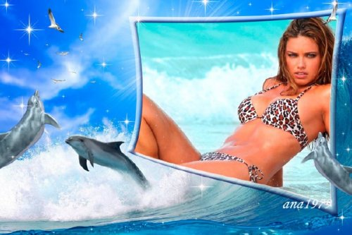 Рамка для фотошопа - Чайки и дельфины