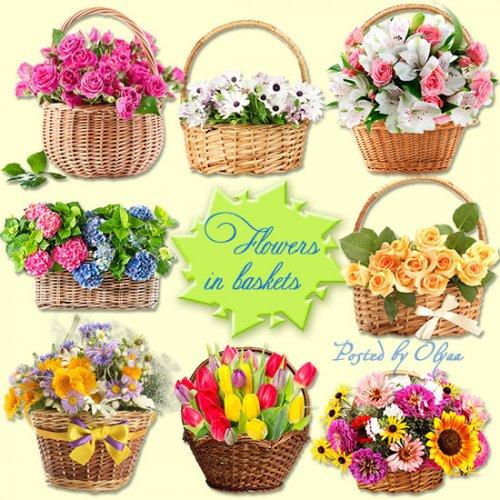 Цветы в корзинках - Клипарт PNG на прозрачном фоне