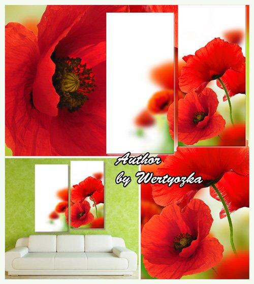 Красные маки, полевые цветы - Диптих в psd формате