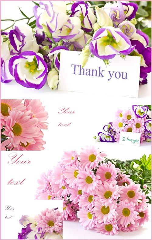 Хризантемы, букеты с карточками для текста - растровый клипарт