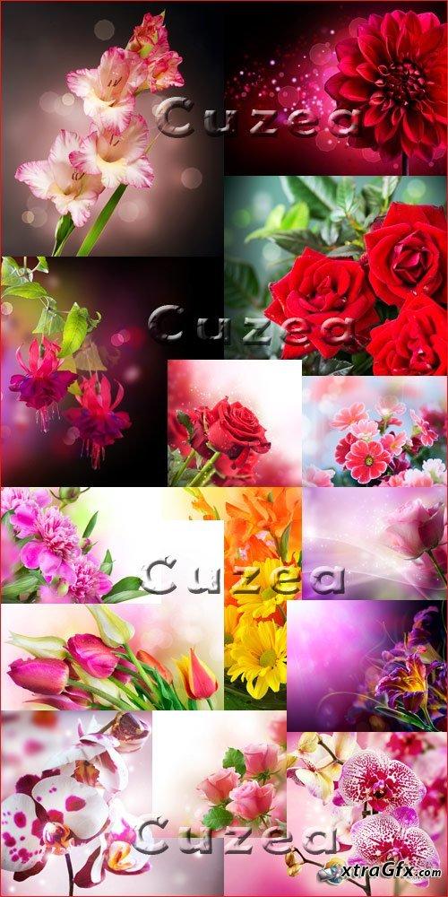 Коллекция цветов - Stock photo