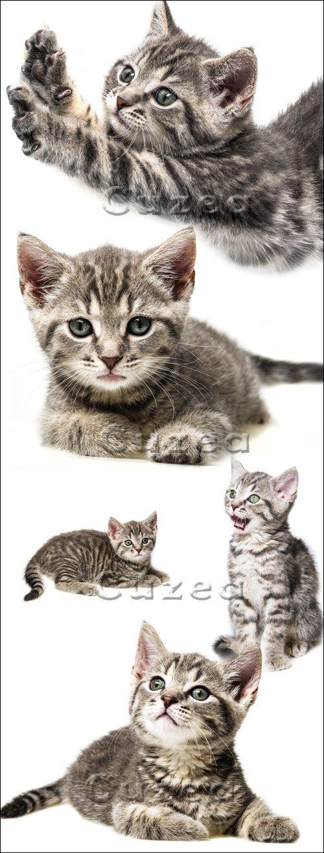 Серый котёнок на белом фоне / Grey cat - stock photo