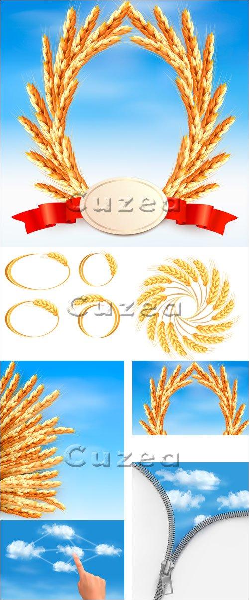 Колосья пшеницы в векторе / Wheat ears - vector stock