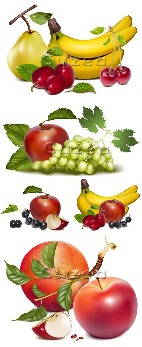 Фрукты на белом фоне в векторе / Sweet fruits on white backgrounds in vector