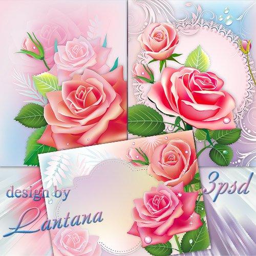PSD исходники - Куст нежных роз заполнил утро ароматом