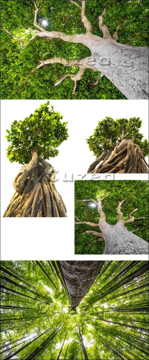 Большое древнее дерево / Old tree - stock photo