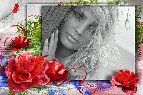 Фоторамочка - Нежность цветов