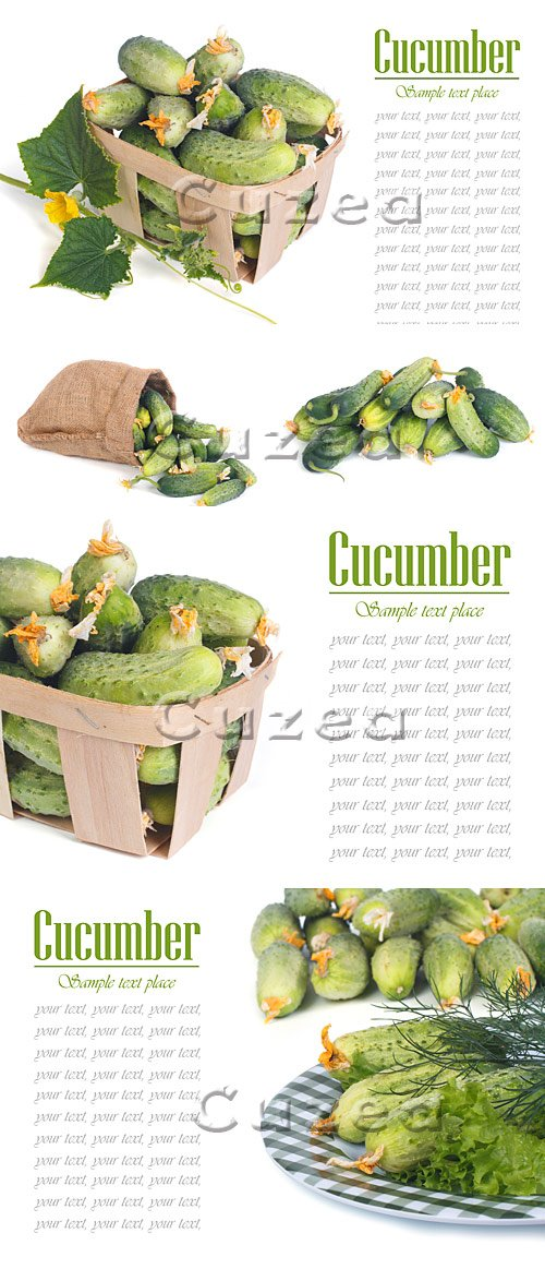 Огурцы и место для текста / Green cucumbers and place for text on white background - stock photo