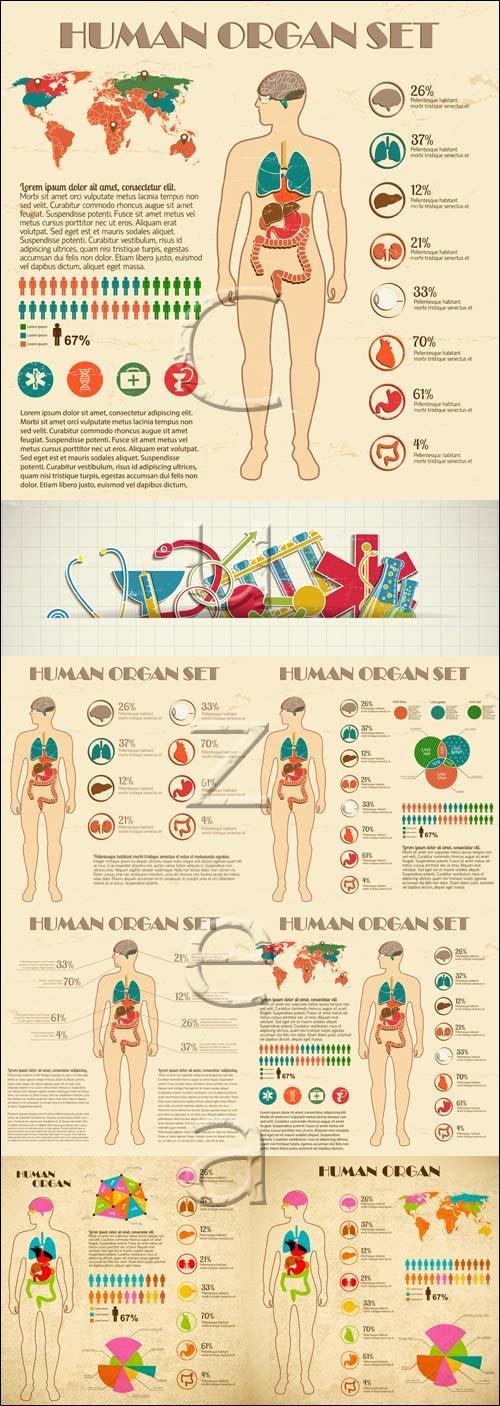 Медицинские инфографики / Medical infographic - vector stock