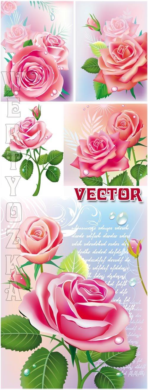 Прекрасные розовые розы / Beautiful pink roses - vector clipart