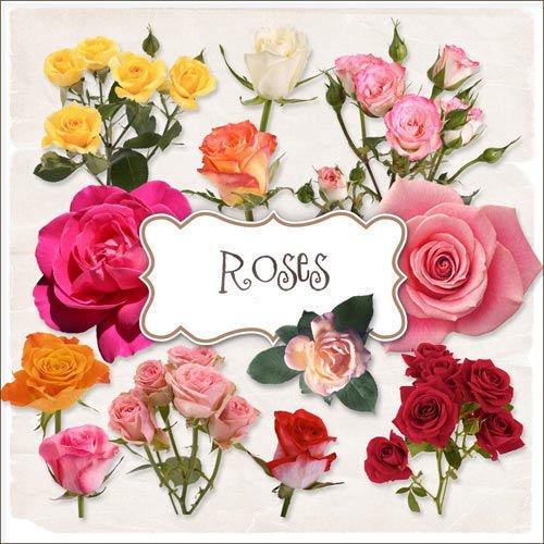 Цветочный скрап-комплект - Розы