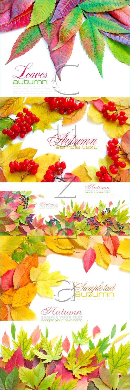 Осенние листья и место для текста / Autumn leaves and place for text - stock photo