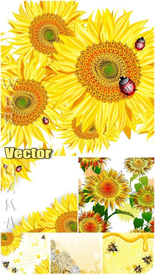 Подсолнухи, пчелы и божьи коровки / Sunflowers, bees and ladybugs - vector backgrounds