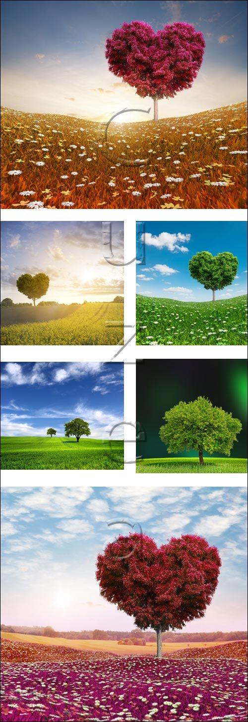 Природа и дерево любви / Nature and love tree - stock photo