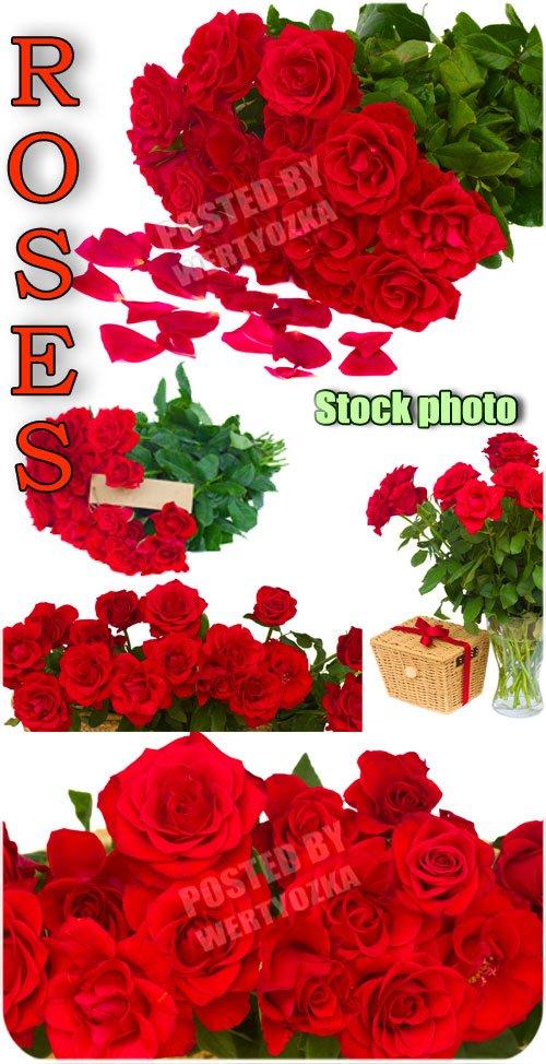 Розы, букеты роз, цветы / Roses, bouquets of roses, flowers - Raster clipart