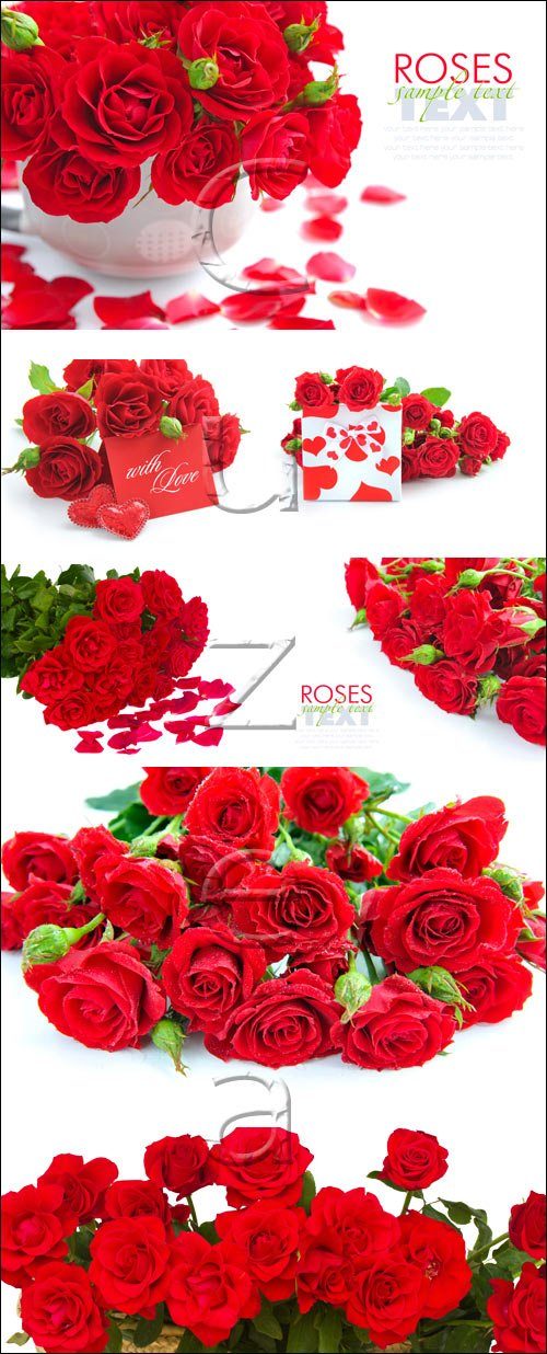 Red roses and gift with heart - stock photo