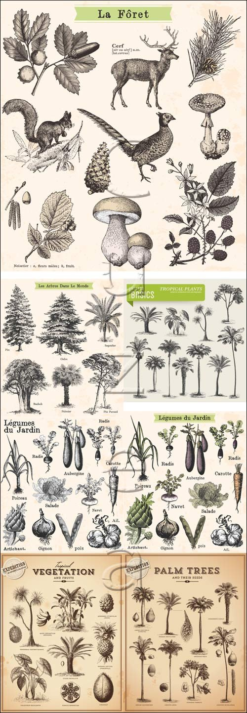 Vector tree and animals collection