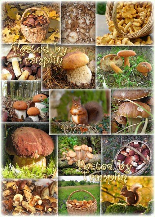 Клипарт или фоны – Грибная осень