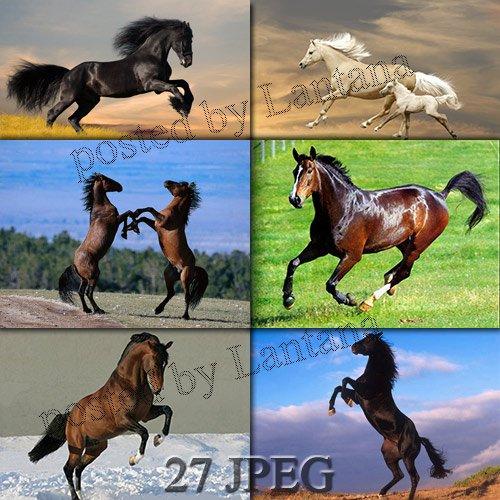 Растровый клипарт - Символ 2014 года - Лошадь