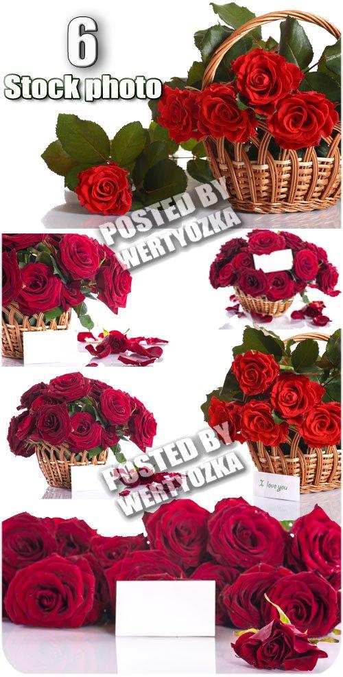 Розы, корзины с розами и карточками для текста / Roses - stock photos